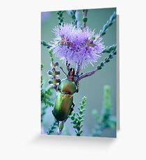 Christmas Beetle at Cosy Corner Greeting Card