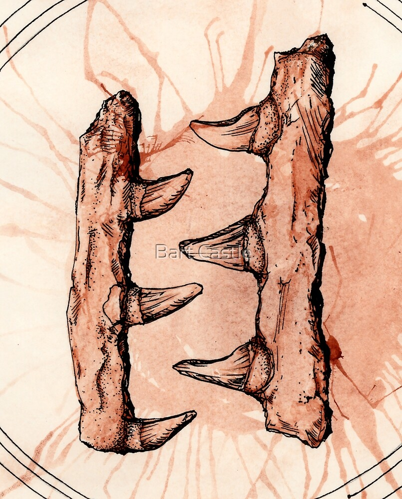 Jaw Bones - Mosasaurus by Bart Castle