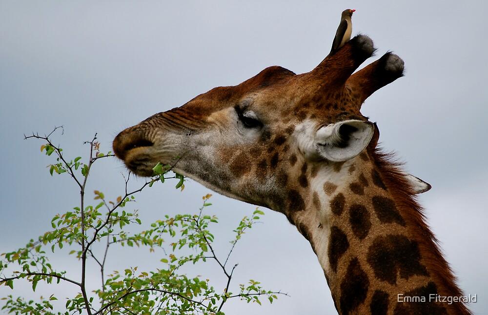 Giraffe by Emma Fitzgerald