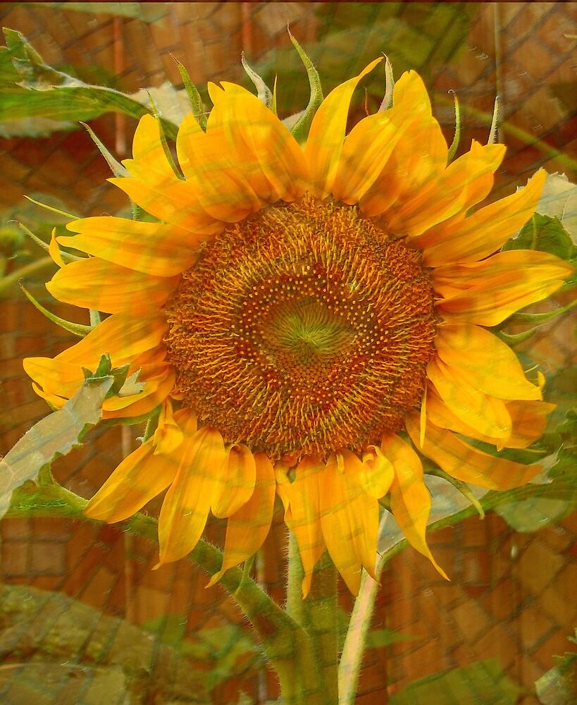Bring Back the Sun! by JanG