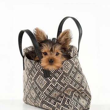 Cute Yorkshire Terrier dog sitting in a bag by ArdeaOnline