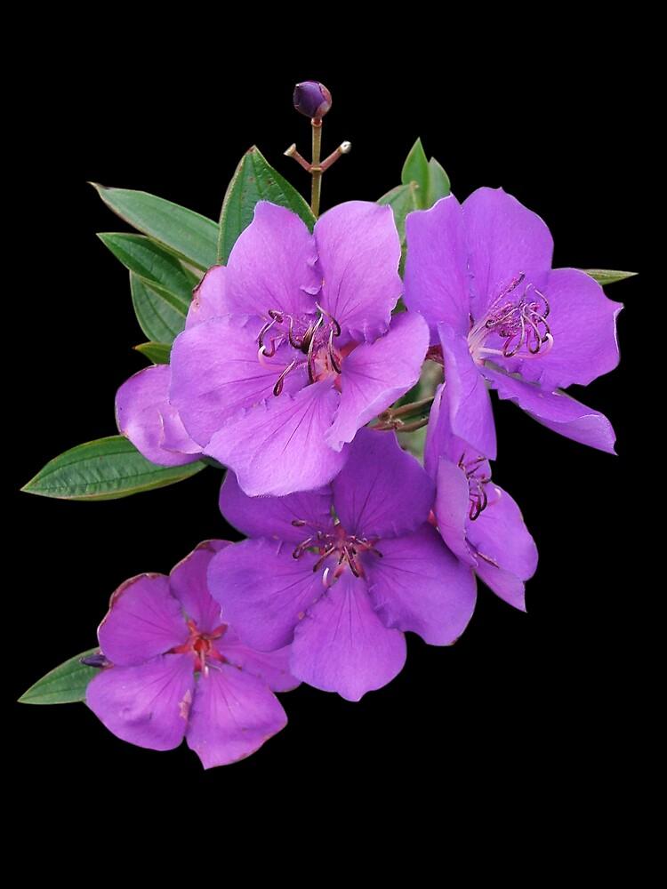 Purple Flowers by poinsiana