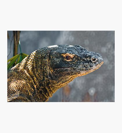 Komodo Monitor Photographic Print