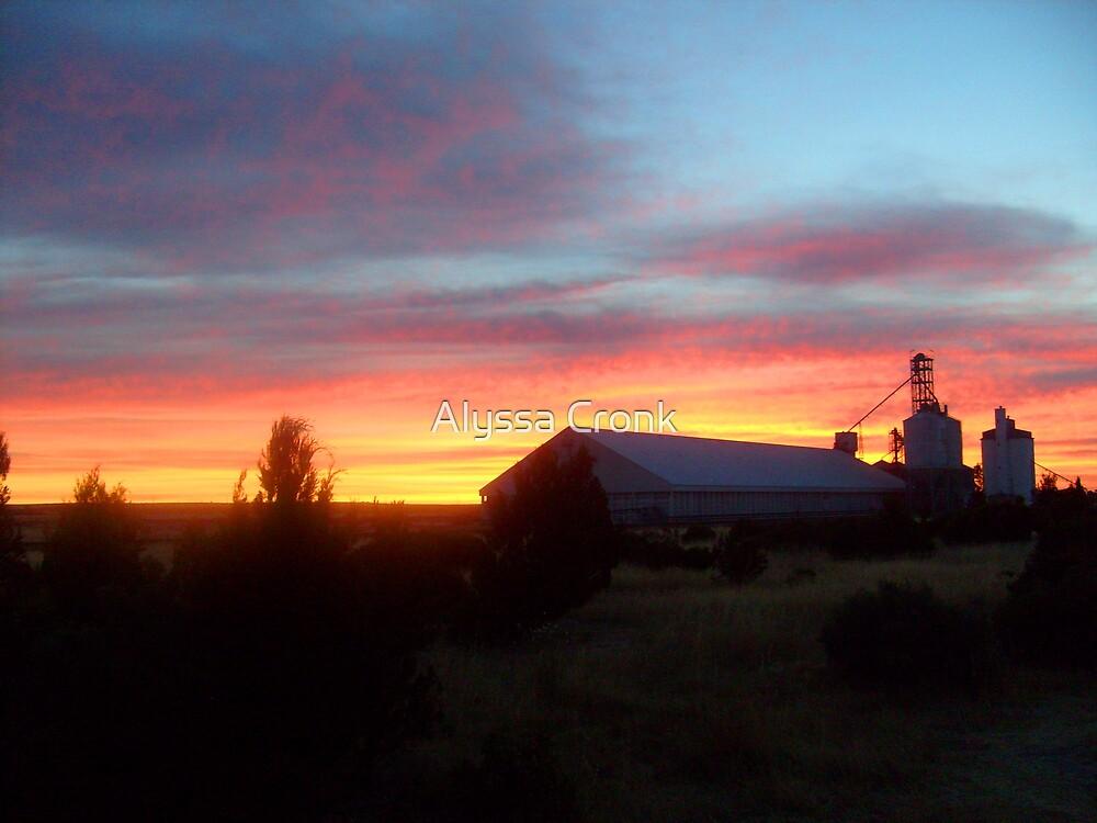 The Colours of Sunrise by Alyssa Passlow