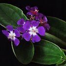 Hawaiian Tree by Rodney Wratten