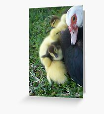 momma duck  Greeting Card