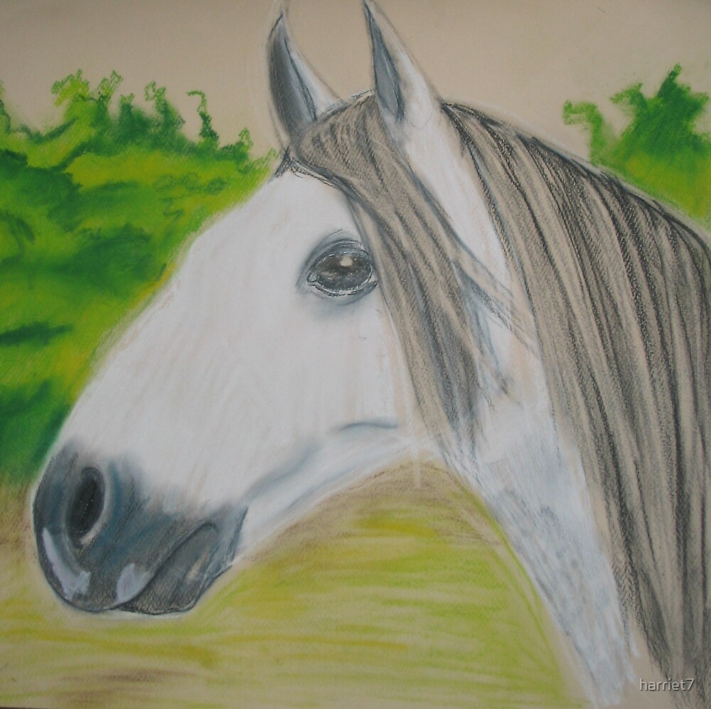 White Horse by harriet7