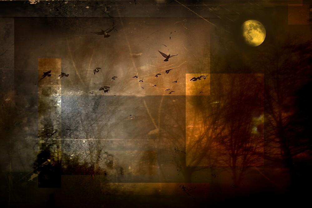 A midsummer's dream by cfazacas