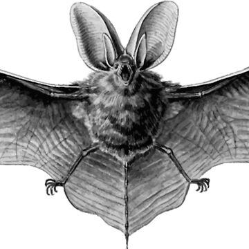 Bat by scrambledtofu