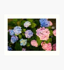 Mom's Garden 2016 - Hydrangea Bush Art Print