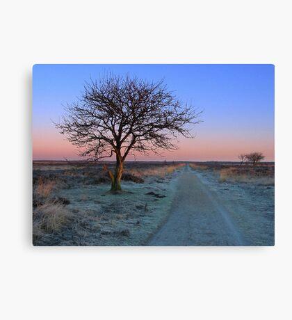 Sunrise Morning, Fochteloerveen in Winter Canvas Print