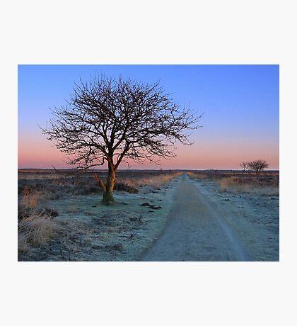 Sunrise Morning, Fochteloerveen in Winter Photographic Print