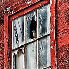 Bird in window by Angela E.L. Clements