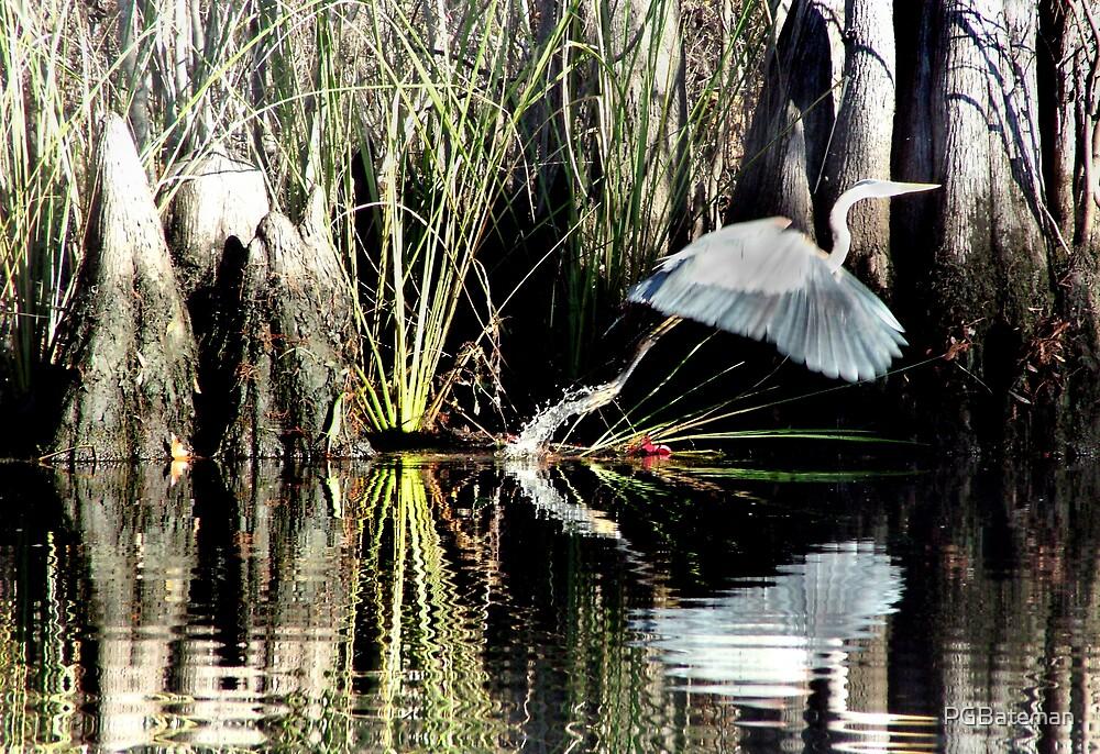 Heron 2 by PGBateman