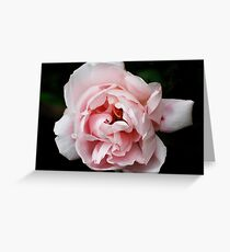 Albertine Greeting Card