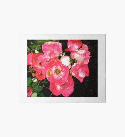 Governor General's roses 5 Art Board