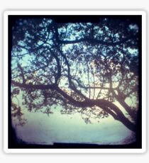 Sunset trees ttv photograph Sticker