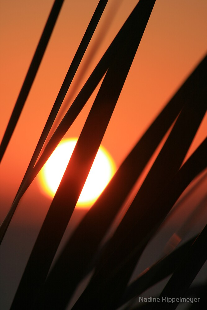 Blazing Sunset and Grasses by Nadine Rippelmeyer