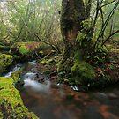 rainy rainforest  by Donovan Wilson