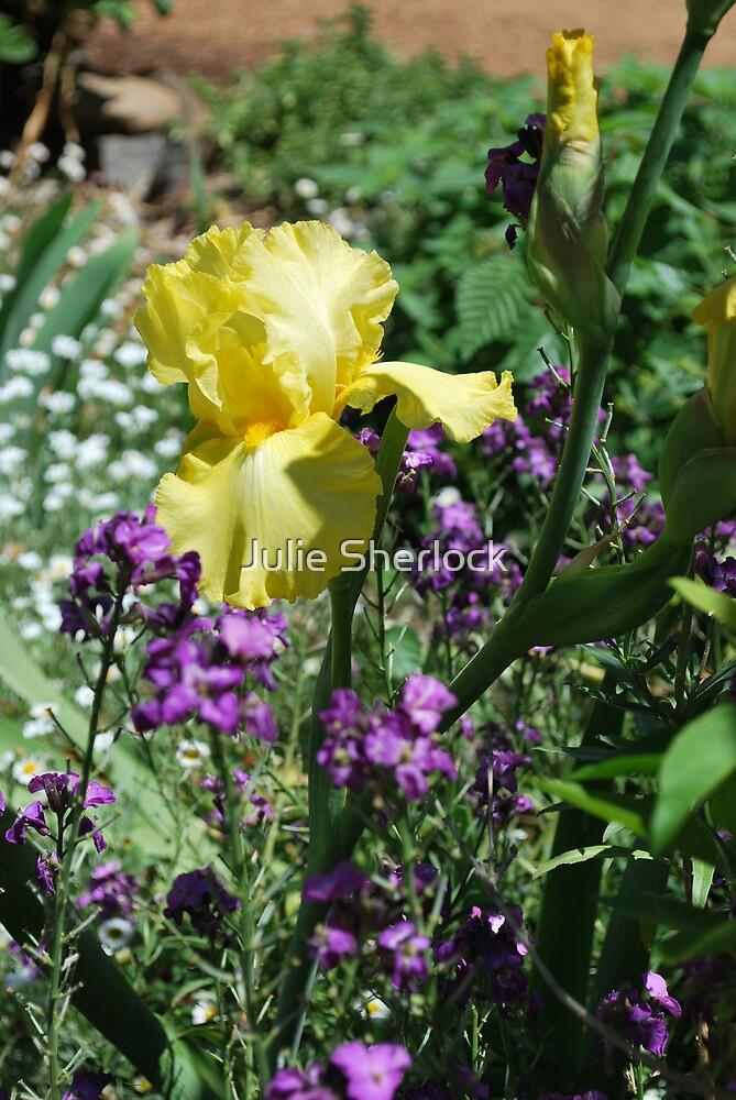 iris flower by Julie Sherlock