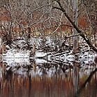 First Snow At The Pond by Debbie Oppermann