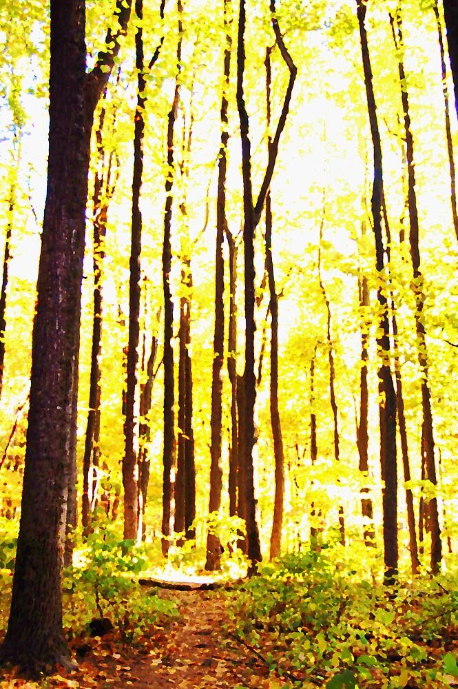 tall trees  by dbcarolinagirl