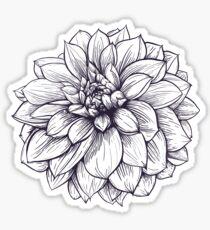 Thomas Edison Dahlia Botanical Illustration in Black and White Sticker