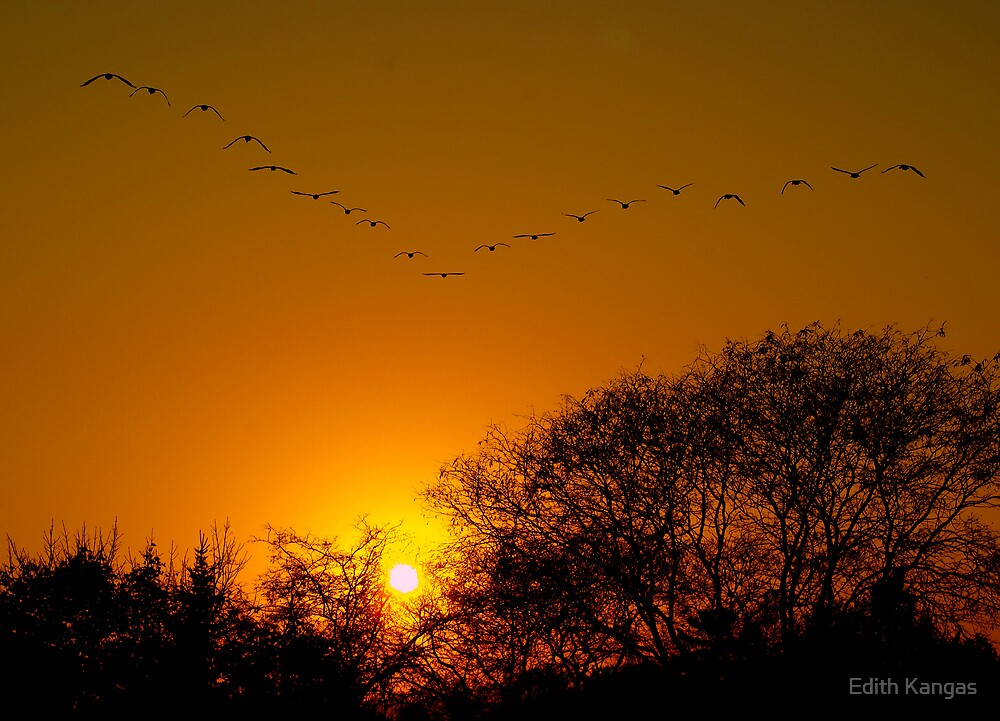 Flying into the Sunset by Edith Kangas