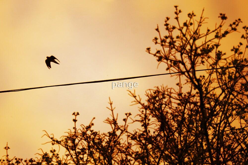 Take Flight by pange