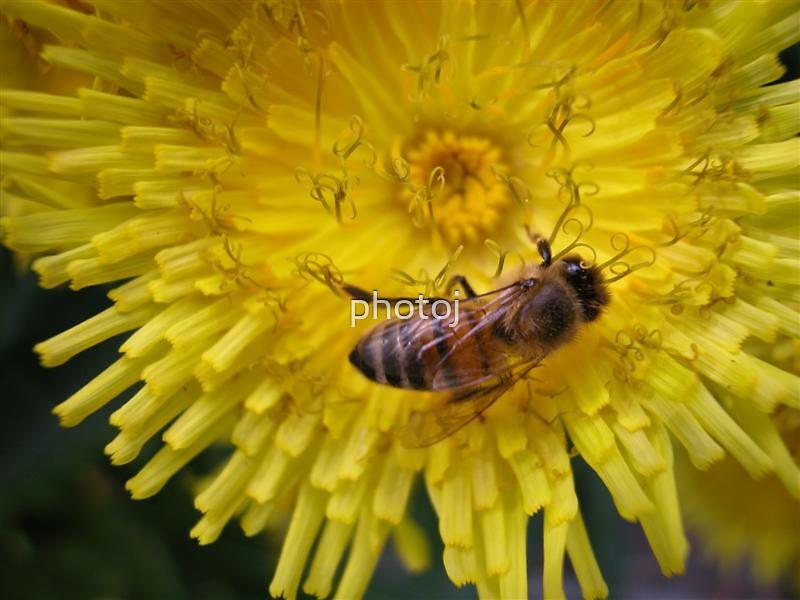 photoj Bug by photoj