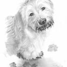 muddy sheep dog drawing by Mike Theuer