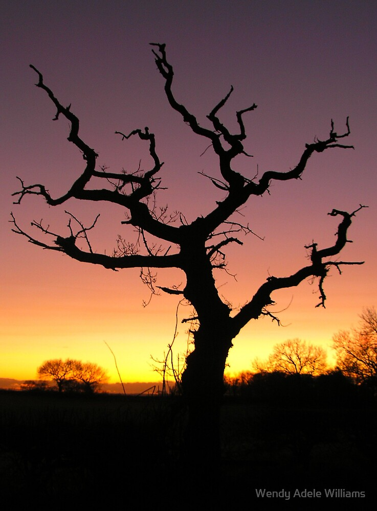 Gnarled Tree by Wendy Adele Williams