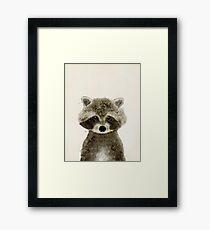 little raccoon Framed Print