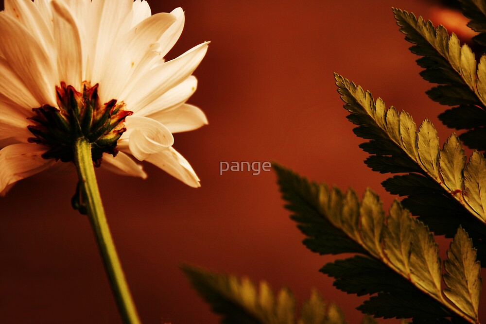 Rust by pange