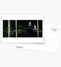 Swamp Lilies Postcards