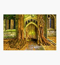 Yew Trees and North Door, St. Edwards Parish Church, Stow on the Wold, England Photographic Print
