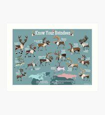 Know Your Reindeer Art Print