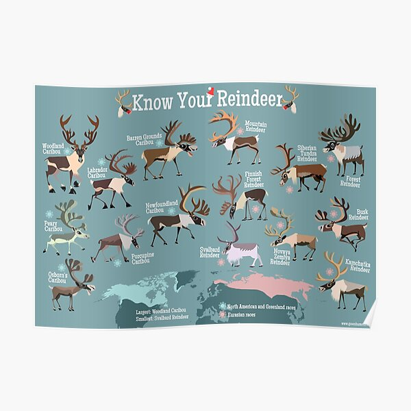 Know Your Reindeer Poster