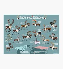 Know Your Reindeer Photographic Print