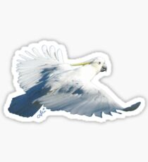 Cockatoo Sticker