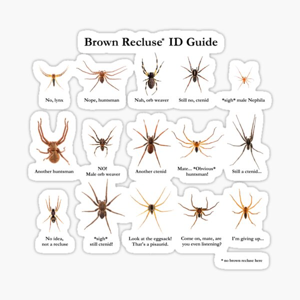 Brown Recluse ID Guide Sticker