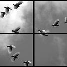 Fly By by Kitsmumma