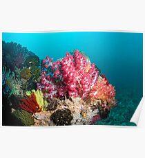 Soft corals - Raja Ampat  Poster