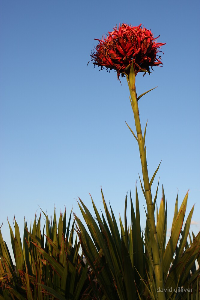 red flower by david gilliver
