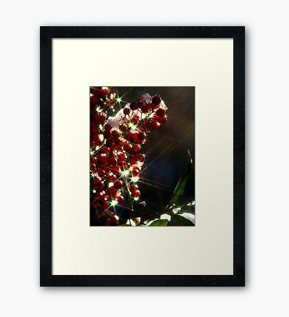 Berry Delightful Framed Print