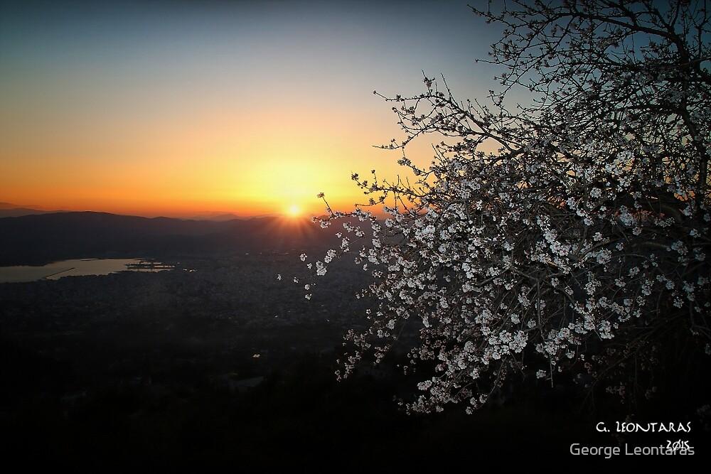 Almond tree on view by George Leontaras