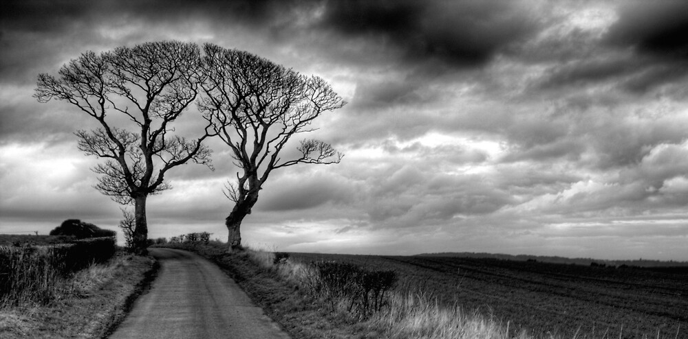 Kissing Trees by Ian Duff