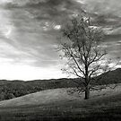 Lone Tree by Gary L   Suddath