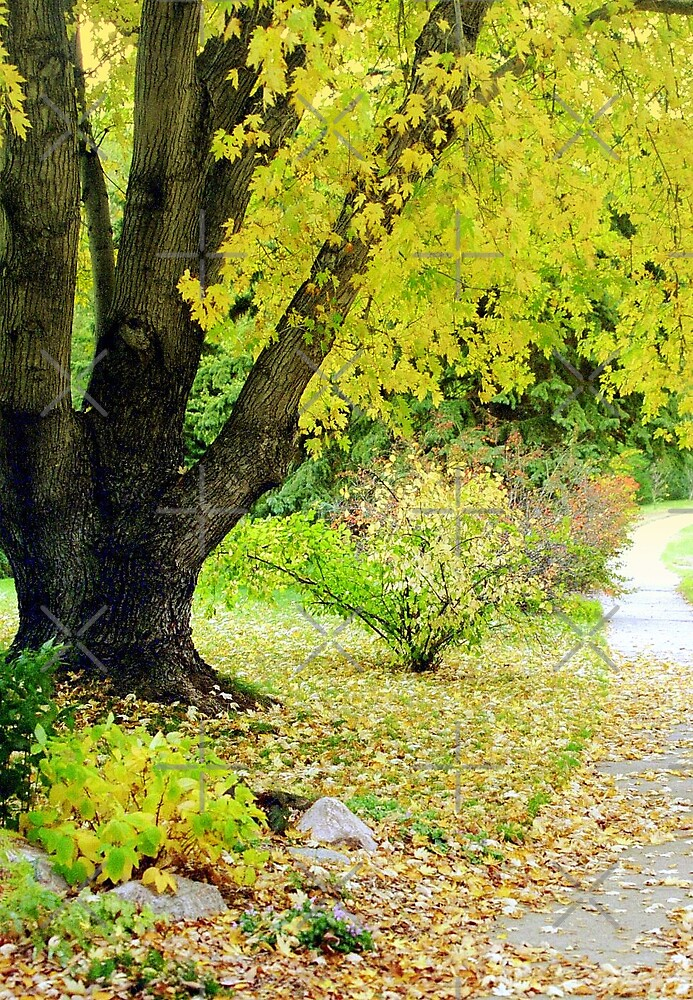 Autumn's Pathway by Julie's Camera Creations <><