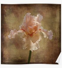 Frilly Iris #3 Poster